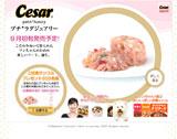 CESAR petit★luxuryのWEBデザイン