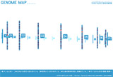 GENOME MAPのWEBデザイン